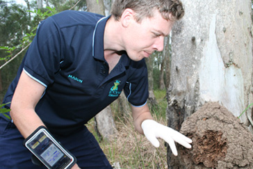 Termite inspections Scarborough