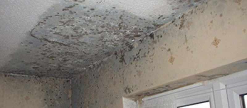 Pest Inspections Mould